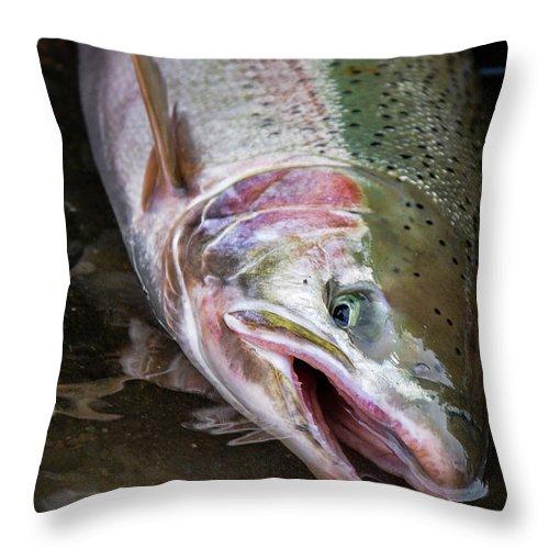Fishing Throw Pillow featuring the photograph Steelhead 1 by Jason Brooks