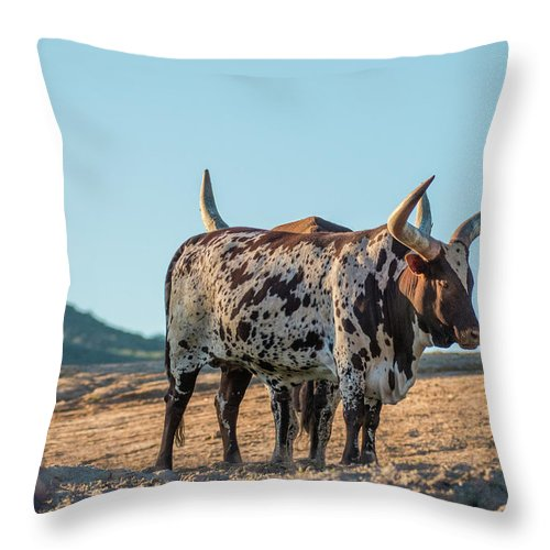 Steers Throw Pillow featuring the photograph Steers In The Desert by Andrew Lelea