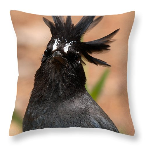 Jay Throw Pillow featuring the photograph Stellar's Jay With Rock Star Hair by Max Allen