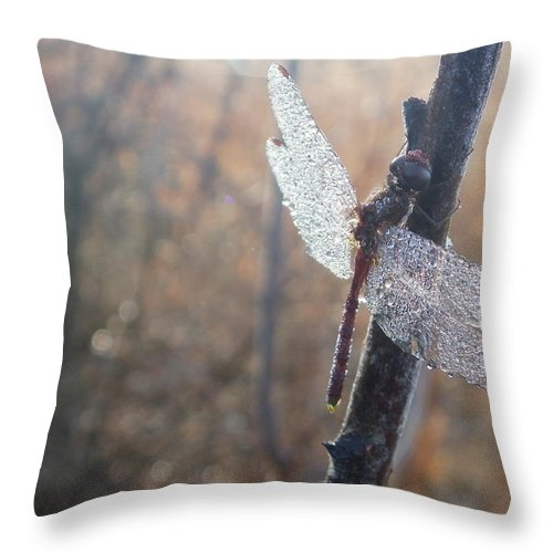 Bugs Throw Pillow featuring the photograph Still Snoozing by Peggy King