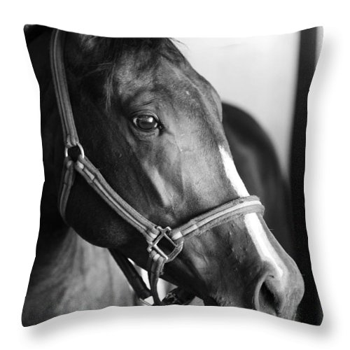 Horse Throw Pillow featuring the photograph Horse And Stillness by Marilyn Hunt