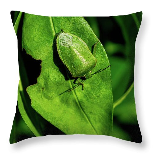 Nature Throw Pillow featuring the photograph Stink Bug On Leaf by Martin Crnjak