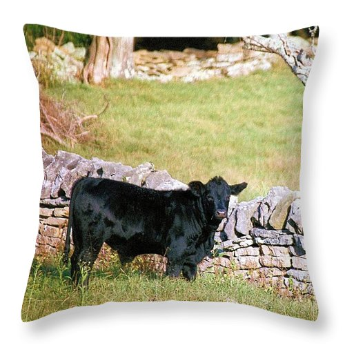 Animals Throw Pillow featuring the photograph Stonewalled by Jan Amiss Photography