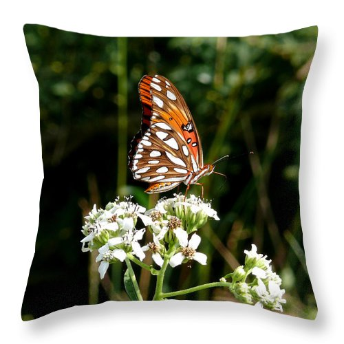 Butterfly Throw Pillow featuring the photograph Stopping For A Snack by Mark Grayden