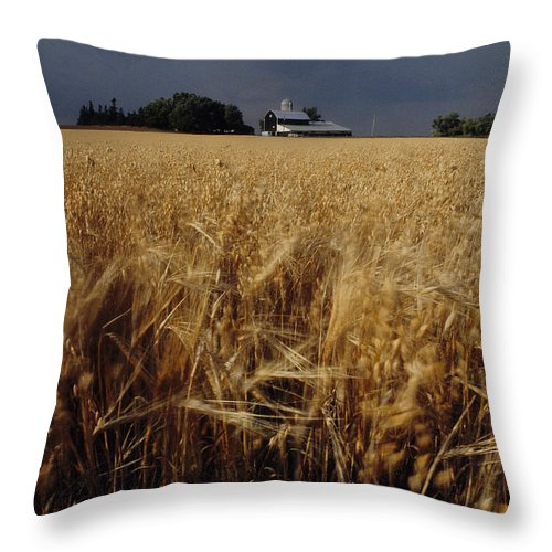Wheat Throw Pillow featuring the photograph Storm Over Wheat Field by Steve Somerville