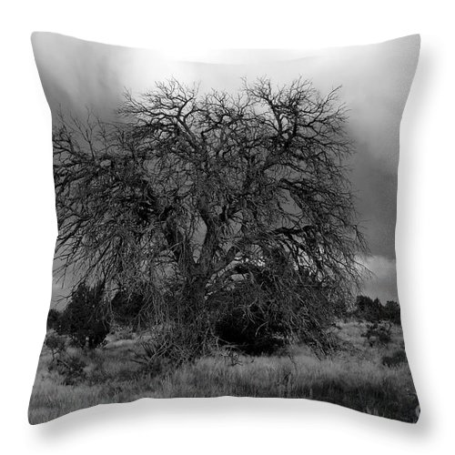 Storm Throw Pillow featuring the photograph Storm Tree by David Lee Thompson