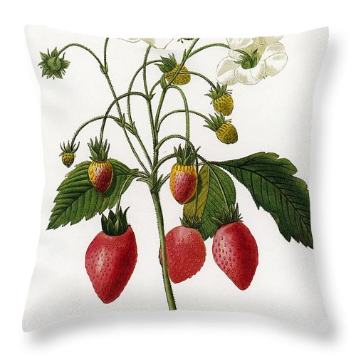 1833 Throw Pillow featuring the photograph Strawberry by Granger