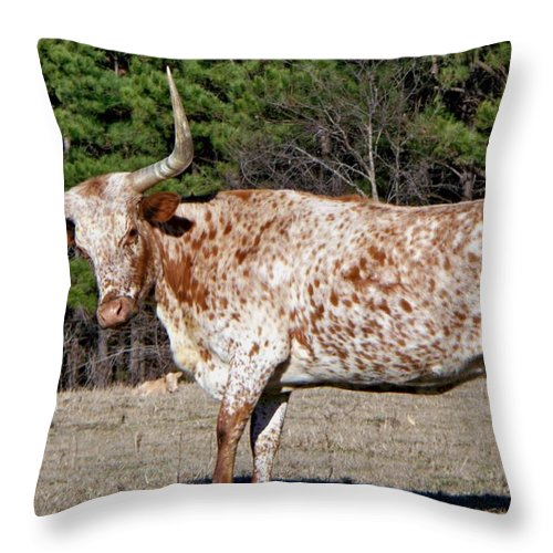 Animal Throw Pillow featuring the photograph Strike A Pose - Longhorn Style by Betty Northcutt