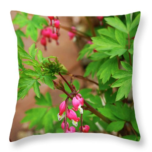 Flower Throw Pillow featuring the photograph String Of Bleeding Hearts by Marilyn Hunt