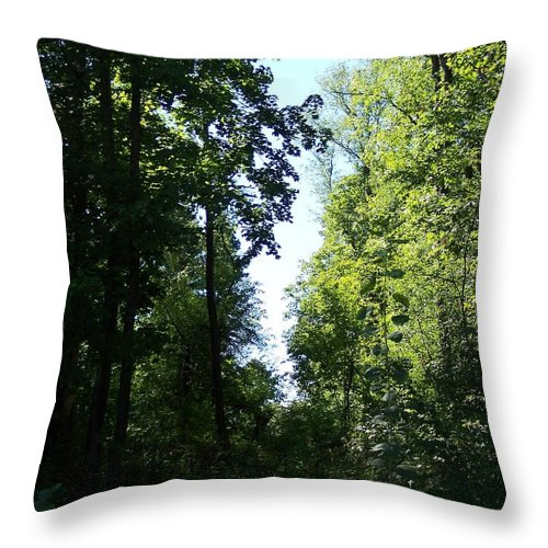 Tree Throw Pillow featuring the photograph Stripe Of Sky by Michelle Miron-Rebbe
