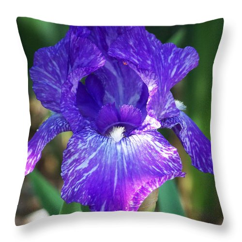Flowers Throw Pillow featuring the photograph Striped Blue Iris by Kathy McClure