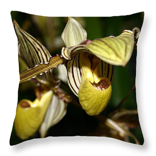 Orchid Throw Pillow featuring the photograph Striped Orchid by Mary Haber