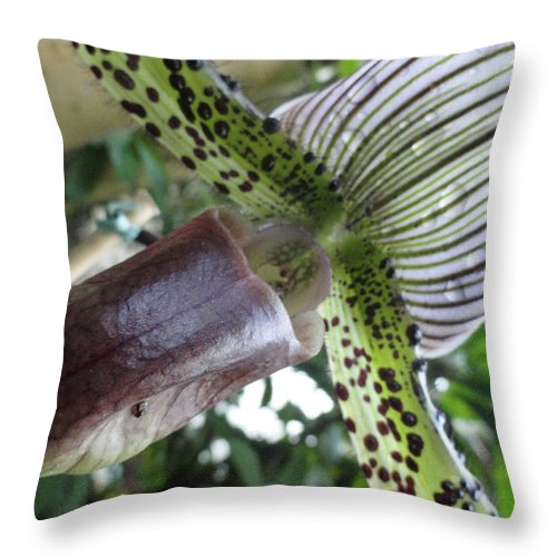 Orchid Throw Pillow featuring the photograph Stripes Or Solids by Trish Hale