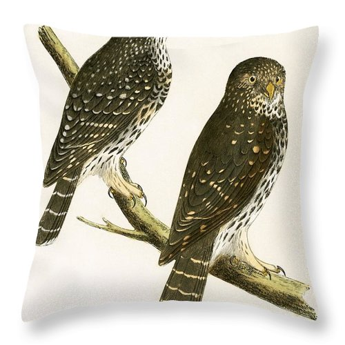 Bird Throw Pillow featuring the painting Strix Pusilla by English School