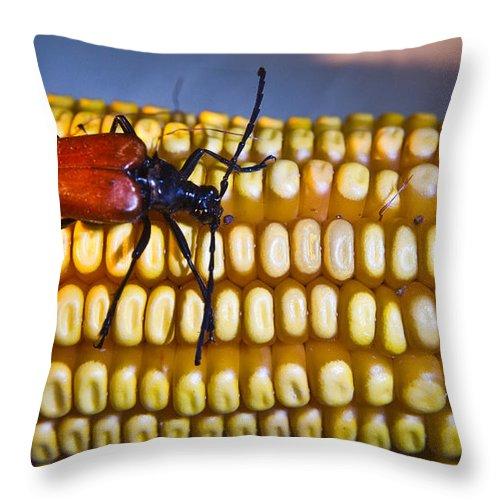 Ear Throw Pillow featuring the photograph Strolling Along The Ear by Douglas Barnett