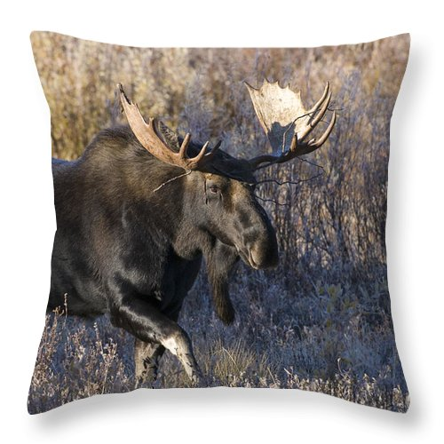 Grand Teton National Park Throw Pillow featuring the photograph Strolling Through The Willows by Sandra Bronstein