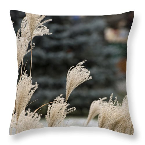 Ex Grass Throw Pillow featuring the photograph Structures 1 by Adrian Bud
