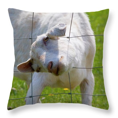 Goat Throw Pillow featuring the photograph Stuck by Mike Dawson