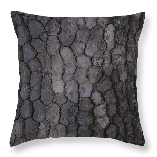 Grey Throw Pillow featuring the photograph Studies In Grey by Douglas Barnett