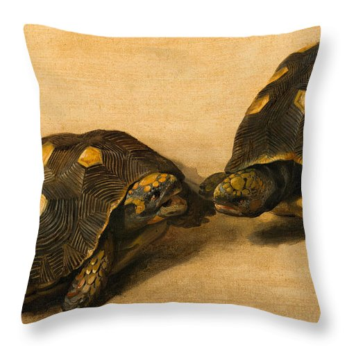 Albert Eckhout Throw Pillow featuring the painting Study Of Two Brazilian Tortoises by Albert Eckhout