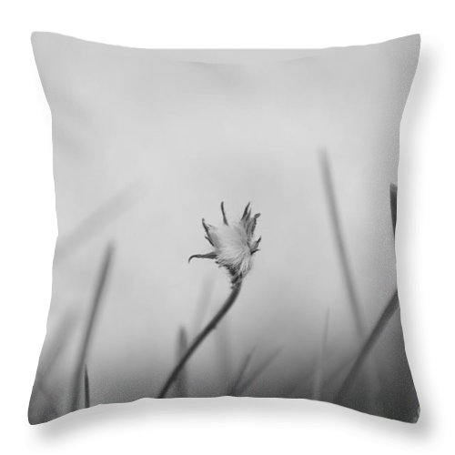 Throw Pillow featuring the photograph Subtle Greys 6 by Eva Maria Nova