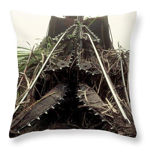 Sugar Cane Throw Pillow featuring the photograph Sugar Cane Cutter by Herman Robert