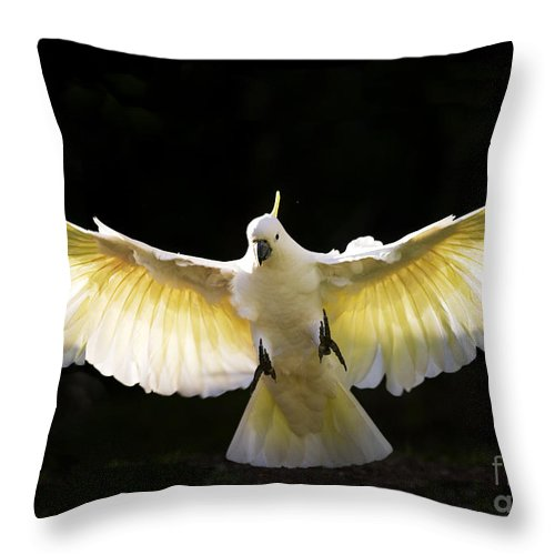 Sulphur Crested Cockatoo Australian Wildlife Throw Pillow featuring the photograph Sulphur Crested Cockatoo In Flight by Avalon Fine Art Photography