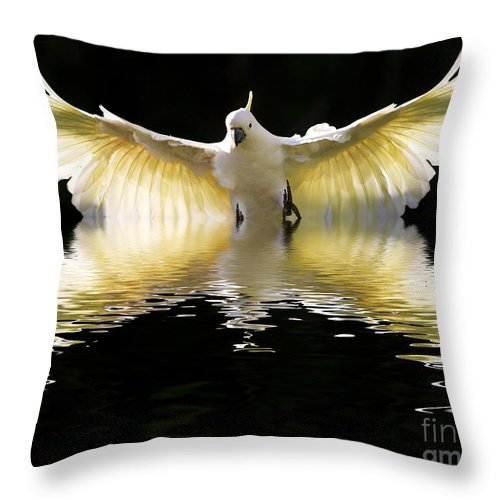 Bird In Flight Throw Pillow featuring the photograph Sulphur Crested Cockatoo Rising by Sheila Smart Fine Art Photography
