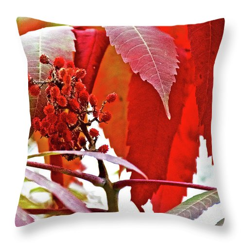Sumac Closeup On White Pine Trail Near Rockford Throw Pillow featuring the photograph Sumac Closeup On White Pine Trail In Kent County, Michigan by Ruth Hager