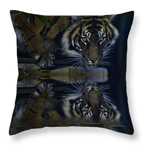 Sumatran Tiger Throw Pillow featuring the photograph Sumatran Tiger Reflection by Sheila Smart Fine Art Photography
