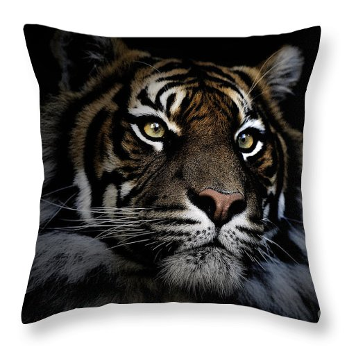 Sumatran Tiger Wildlife Endangered Throw Pillow featuring the photograph Sumatran Tiger by Avalon Fine Art Photography