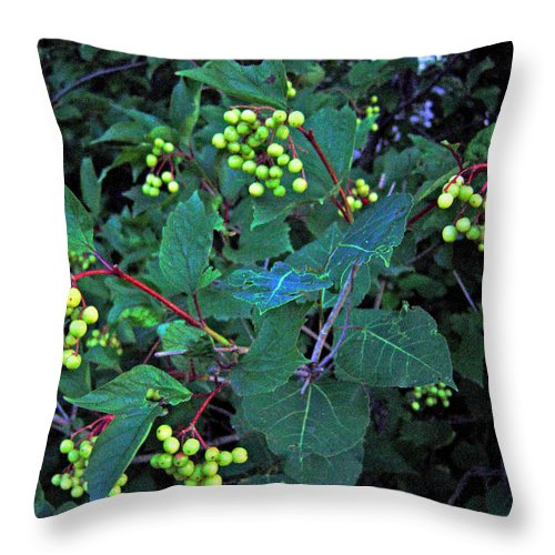 Hi Bush Cranberries And Leaves Throw Pillow featuring the photograph Summer Berries by Joanne Smoley