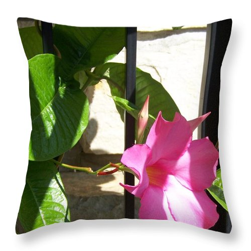Blossom Throw Pillow featuring the photograph Summer Blossom by Jackie Mueller-Jones