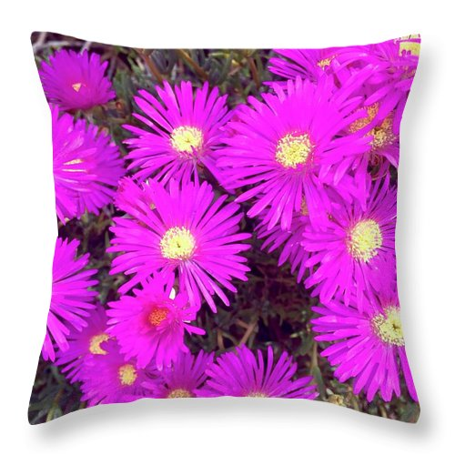 Bright Pink Fuchsia Color Flowers Ruschia Pulvinaris South Africa Shrubby Ice Plant Water Wise Southern California Drought Resistant Nature Flora Throw Pillow featuring the photograph Summer Delight by Russell Keating