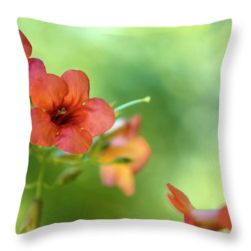 Flower Throw Pillow featuring the photograph Summer Flowers by Nailia Schwarz