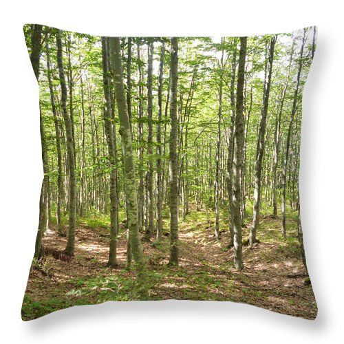 Tuscany Throw Pillow featuring the photograph Summer Forest by Laura Greco