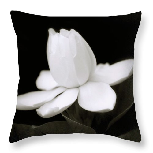 Flower Throw Pillow featuring the photograph Summer Fragrance by Holly Kempe