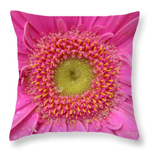 Pink Flower Throw Pillow featuring the photograph Summer Glory by Carol Groenen