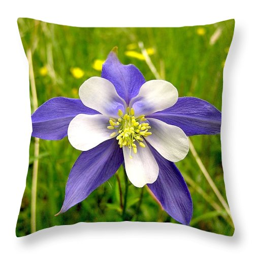 Plant Throw Pillow featuring the photograph Summer In The Rockies by Carol Milisen