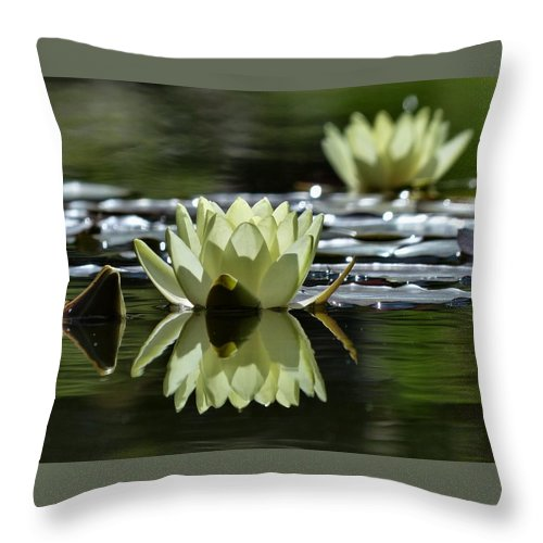 Water Lilies Throw Pillow featuring the photograph Summer Peace In The Rock Gardens by David Curtis