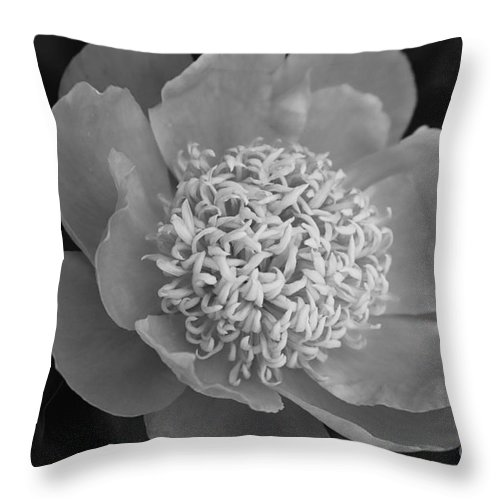 Peony Throw Pillow featuring the photograph Summer Peony by Kathy McClure