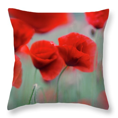 Poppy Throw Pillow featuring the photograph Summer Poppy Meadow 2 by Nailia Schwarz