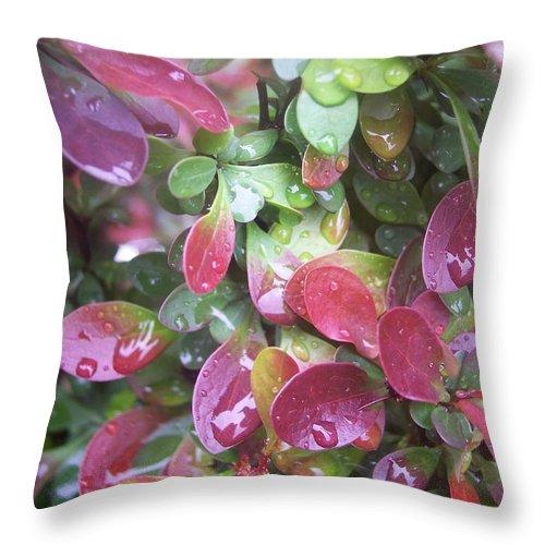 Foliage Leaves Nature Plants Garden Red Green Rain Drops Throw Pillow featuring the photograph Summer Rain by Anna Villarreal Garbis