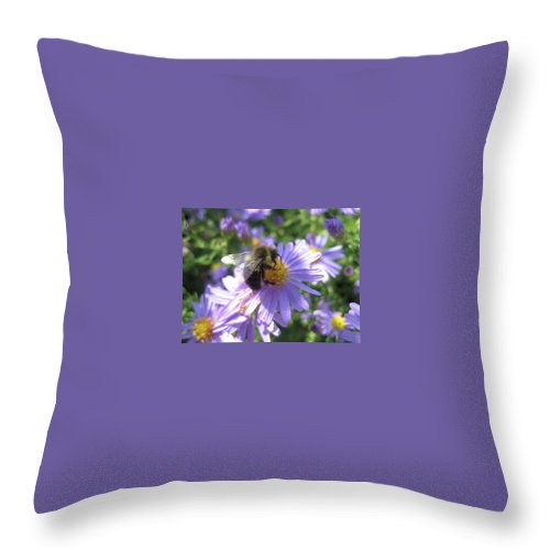 Bee Throw Pillow featuring the photograph Summertime Bee by Cara Packer