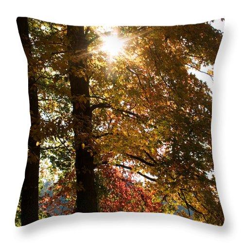 Landscape Throw Pillow featuring the photograph Sun And Autumn by Amanda Kiplinger