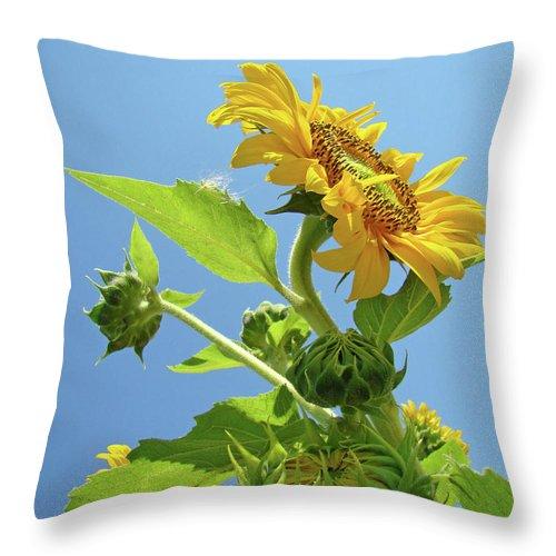 Sunflower Throw Pillow featuring the photograph Sun Flower Artwork Sunflower 5 Giclee Art Prints Baslee Troutman by Baslee Troutman