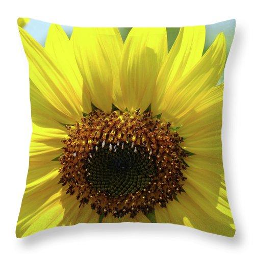 Sunflower Throw Pillow featuring the photograph Sun Flower Glow Art Print Summer Sunflowers Baslee Troutman by Baslee Troutman