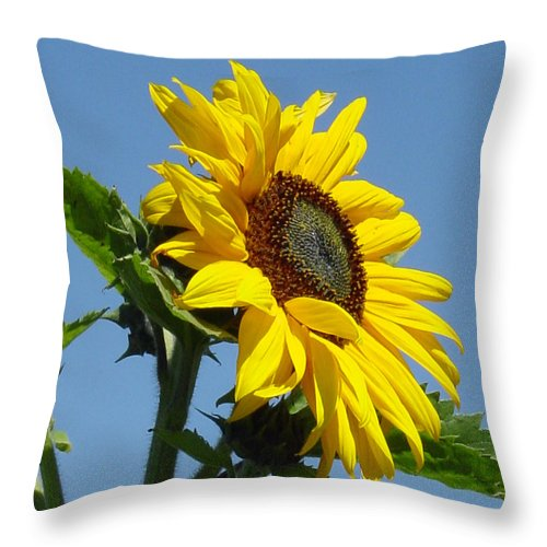 Sunflower Throw Pillow featuring the photograph Sun Goddess by Suzanne Gaff