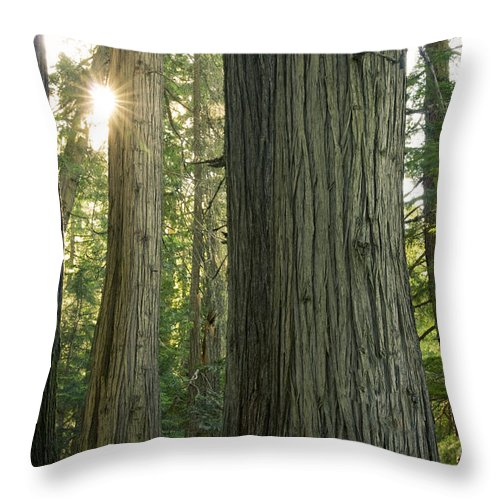 Cedar Throw Pillow featuring the photograph Sun In The Cedars by Idaho Scenic Images Linda Lantzy