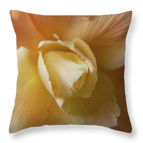 Begonia Throw Pillow featuring the photograph Sun Kissed Begonia Flower by Jennie Marie Schell